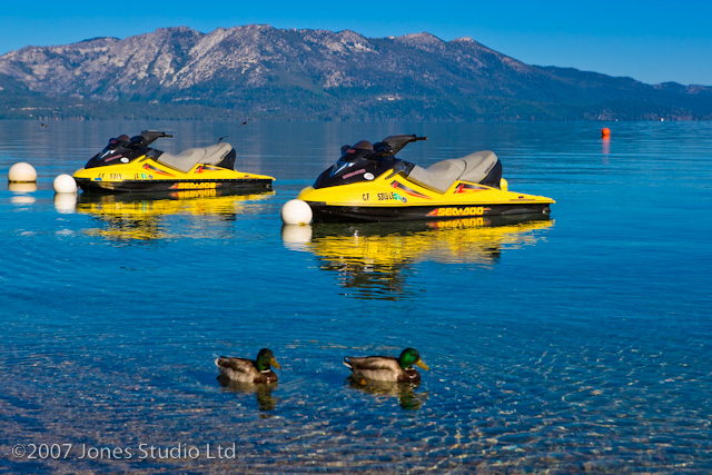 Ducks on Lake Tahoe