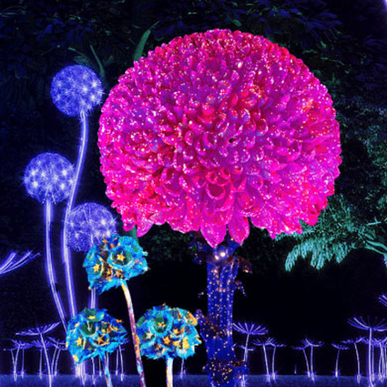 NightGarden at Fairchild Botanical Garden in Miami