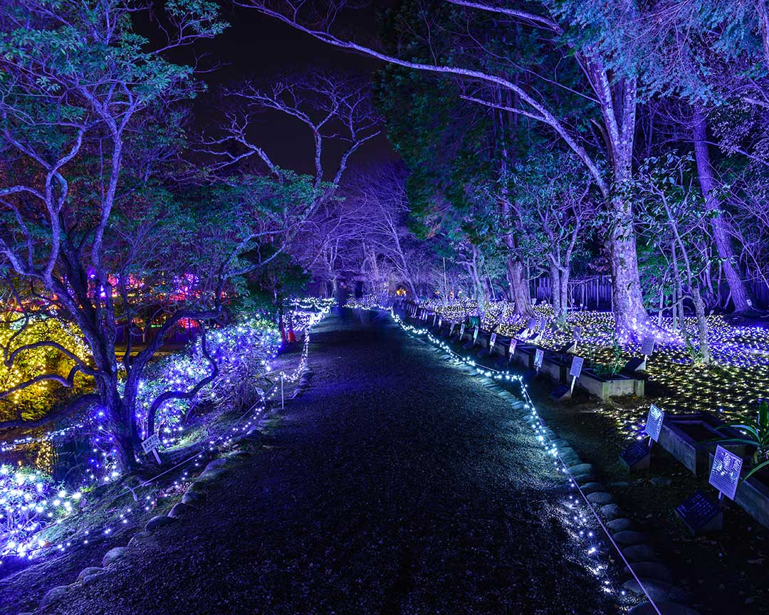 Night Garden at Miami's Fairchild Botanical Garden