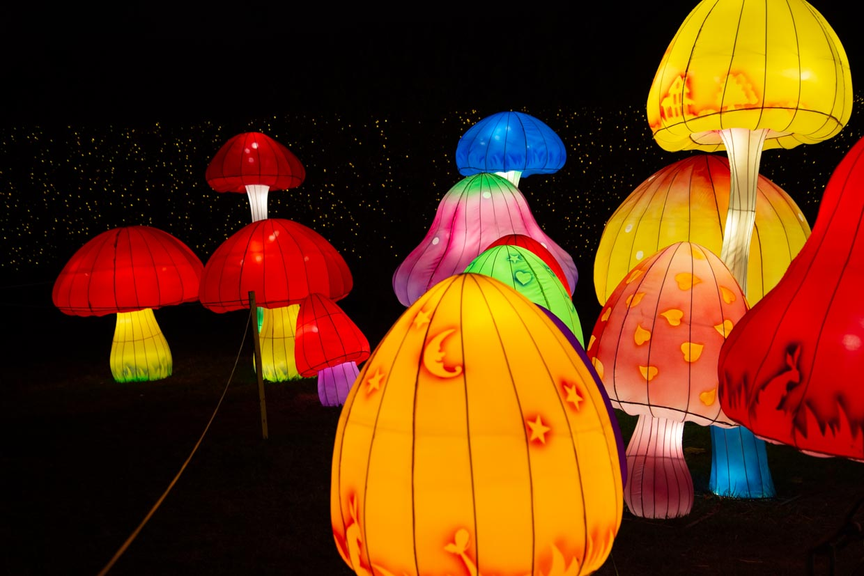 Mushroom forms at the NYC Winter Lantern Festival at Snug Harbor